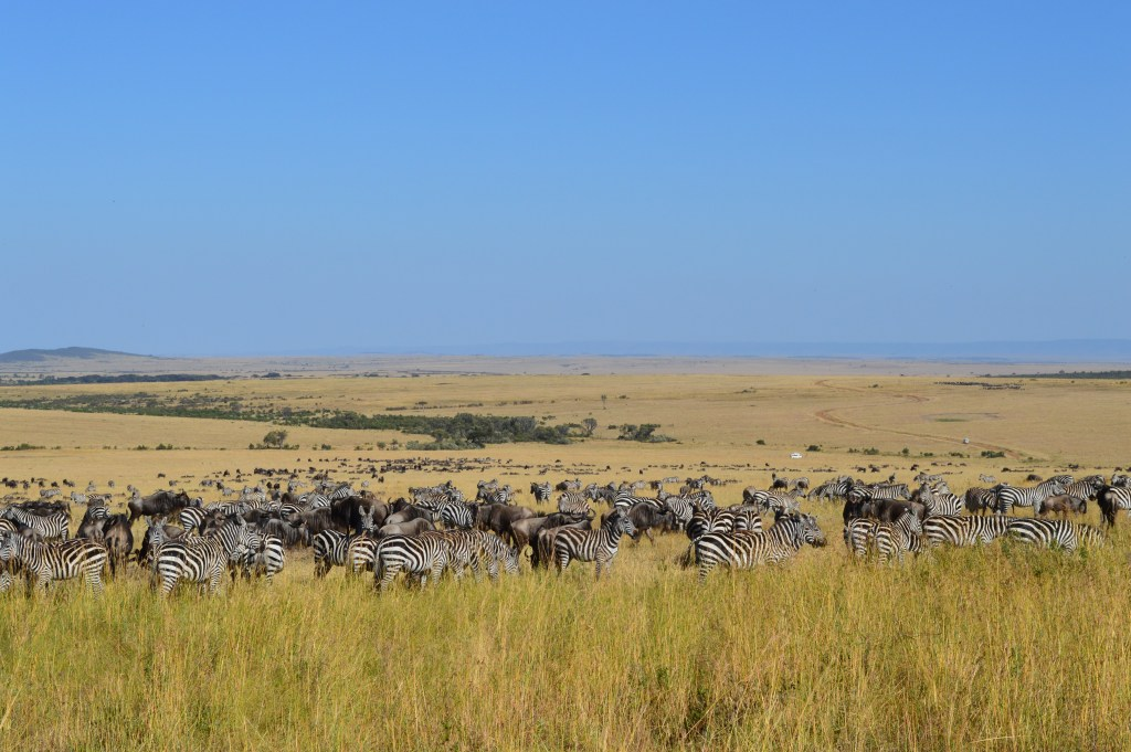 safari-915410