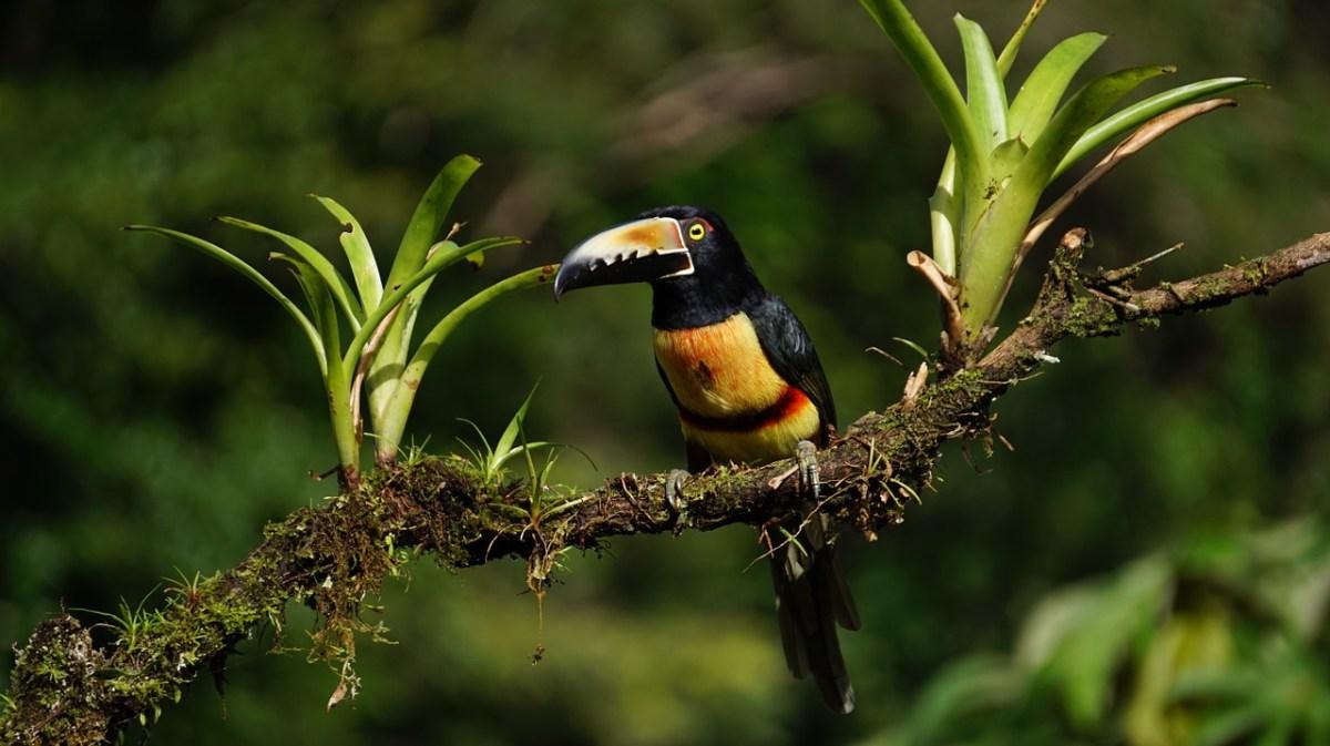 COSTA RICA2