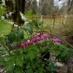 Play Farm spring garden