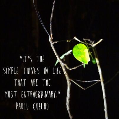 Paulo Coehlo quote