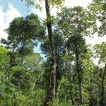 jungle-canopy-nicaragua-yoga-retreat