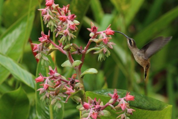 hummingbirds-nicaragua