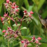 hummingbirds-nicaragua-yoga-retreat