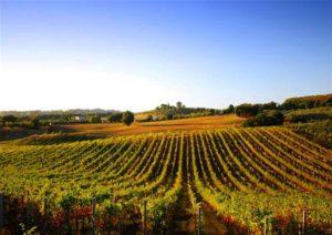 bordeaux-wine-yoga-retreat-france-luxury