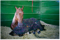 Horse and Arena Bedding