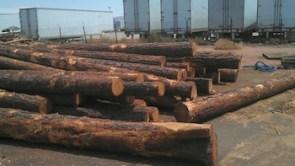 woodlogs71713