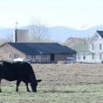 食べてはいけない 輸入牛肉は危険? 米国産、豪州産、欧州産で安全な輸入牛肉はどれ?