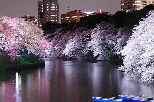 千鳥ケ淵 夜桜