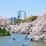千鳥ケ淵・靖国神社のさくらまつり2018!桜の見頃や見所、混雑具合は?