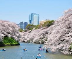 千鳥ケ淵 桜