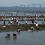 潮干狩り情報2016千葉県木更津の中の島公園、金田海岸、金田見立海岸を紹介