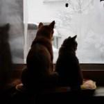留守をする時間が長い時、犬・猫のえさやりが心配!対応法と注意点 気になる自動給餌器「カリカリマシーン」をご紹介