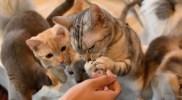 埼玉でおすすめの保護猫カフェをご紹介。猫好きなら行って欲しい理由とは。