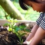 土用の日に土いじりをしてはいけなかった!その理由と他にもしてはいけないこととは?土用についてご紹介。