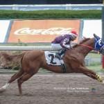 5a Carrera - Rapid Horse