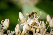 A bug I ran across when photographing flowers