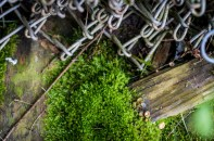 Moss and Fencing Wire