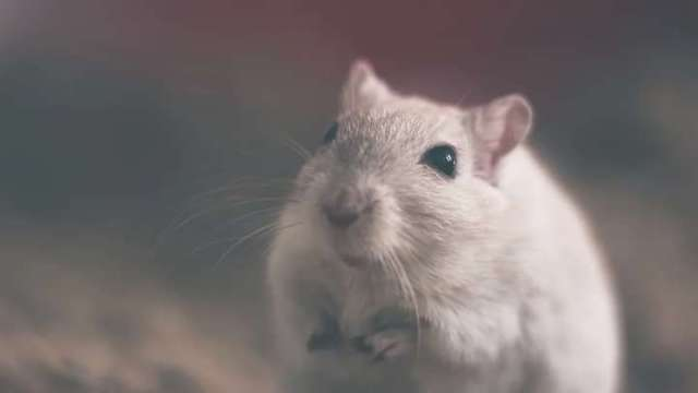 Another disease surface in china called Hantavirus – Man in China dies after testing positive