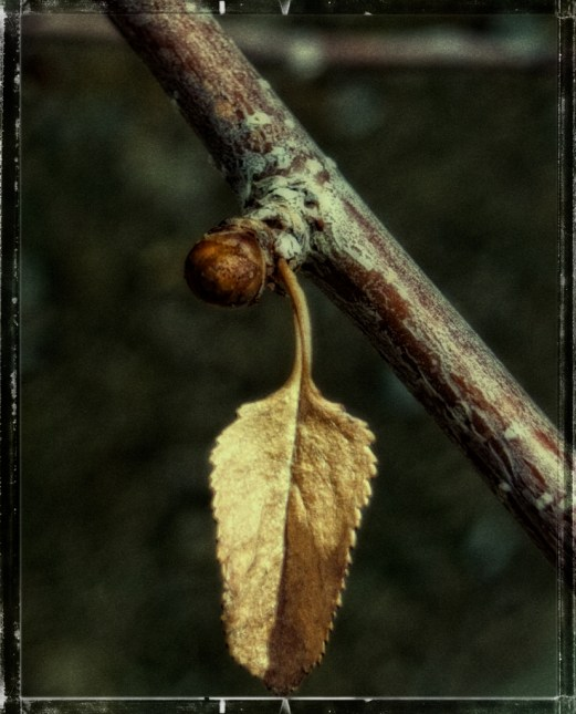 fall's leaf and spring's bud