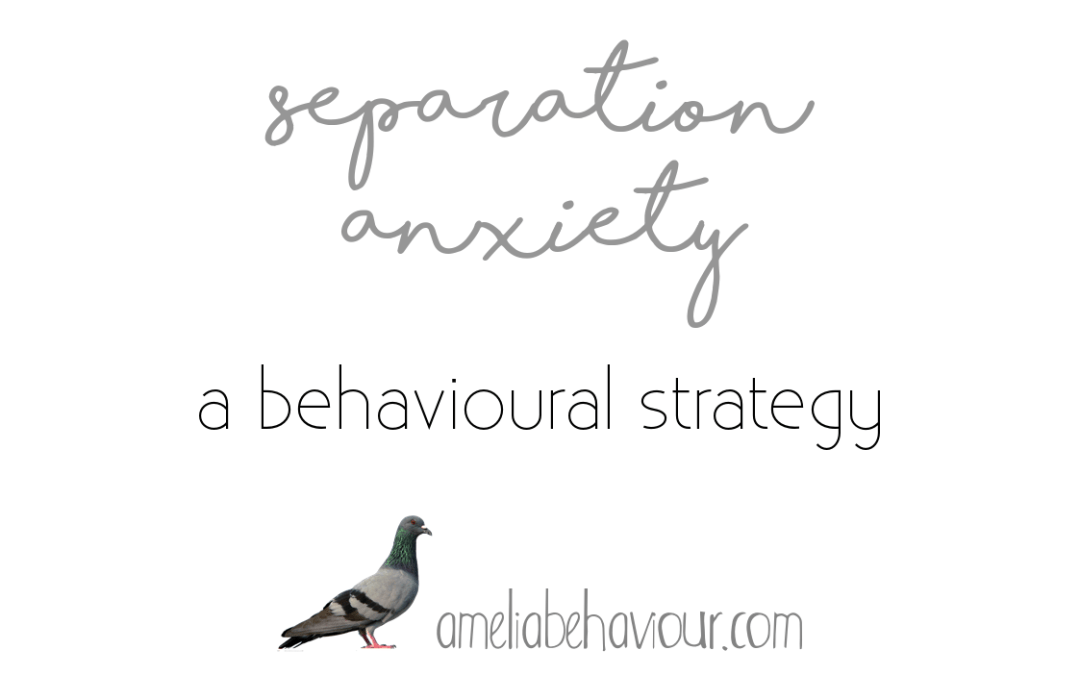 Separation Anxiety: A Behavioural Strategy