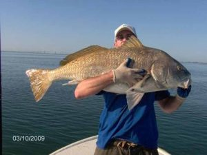 Amelia Island big black drum