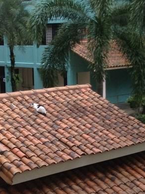 Les chats se la coule douce à Singapour, où ils paressent au soleil ou dans des endroits abrités, et sont nourris par les habitants (bien que ça ne soit pas trop autorisé)