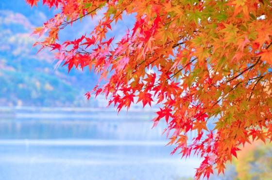 Momiji, koyo, feuilles d'automne au Japon
