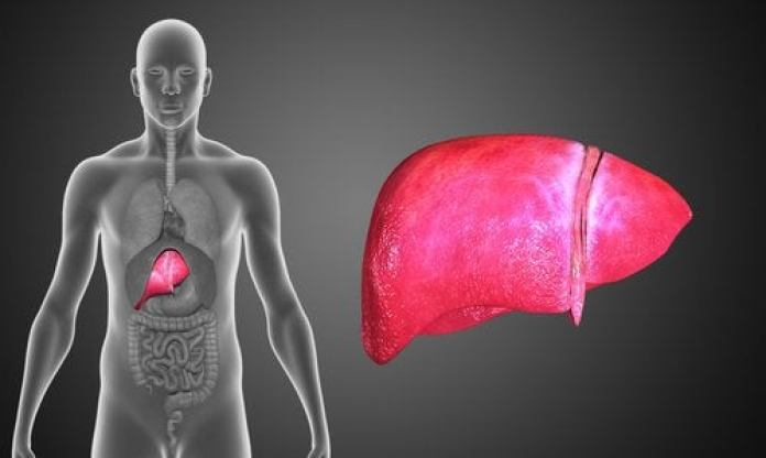le foie dans le corps humain