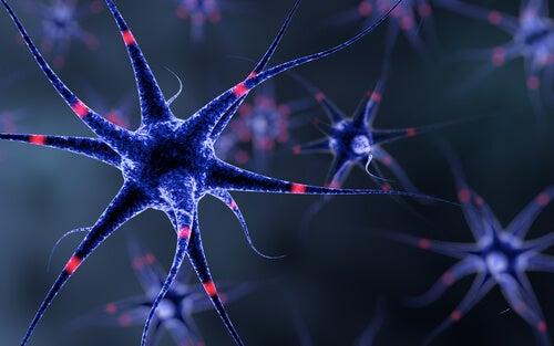 "nervous system ""width ="" 500 ""height ="" 313 "" data-recalc-dims="