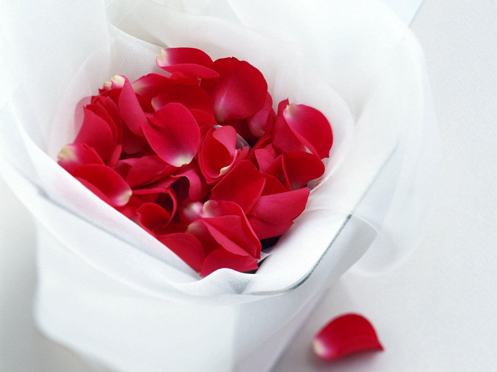 "rose petals ""width ="" 1600 ""height ="" 1200 "" data-recalc-dims="