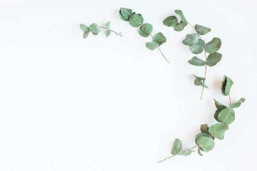 "The eucalyptus to strengthen your lungs and breathe better ""width ="" 500 ""height ="" 334 "" data-recalc-dims="