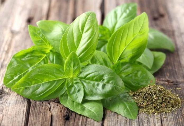 plantes pour soulager les acouphènes