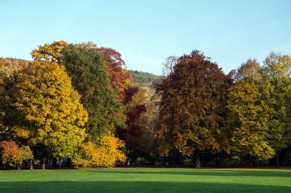 arbres à l'automne