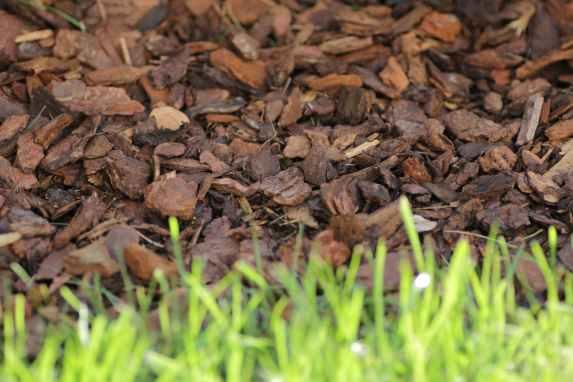 paillage végétal d'écorces de pin