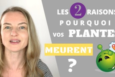 Les 2 plus GROSSES ERREURS pourquoi vos plantes meurent après plantation !