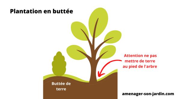 schéma pour butter les plantes sous un arbre