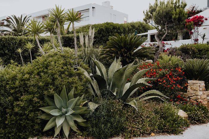 massif méditerranéen jardin sec composé de plantes grasses résiste au gel agaves et plantes vivaces