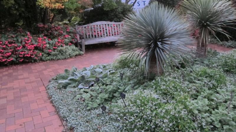 massif plante grasse exterieur yucca avec plantes vivaces