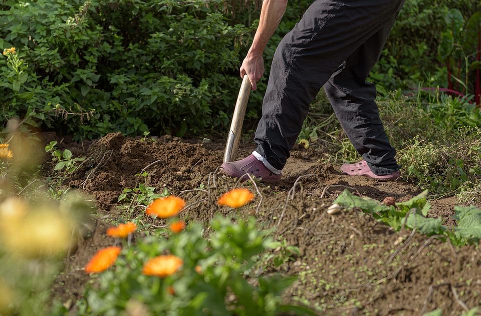 préparation du sol pour plantation d'une haie d'arbustes persistants
