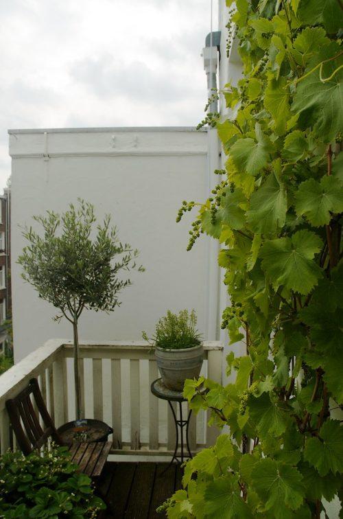 bien choisir un pot pour planter un olivier