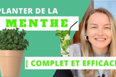La paysagiste Maud du blog Aménager Son Jardin explique comment planter de la menthe
