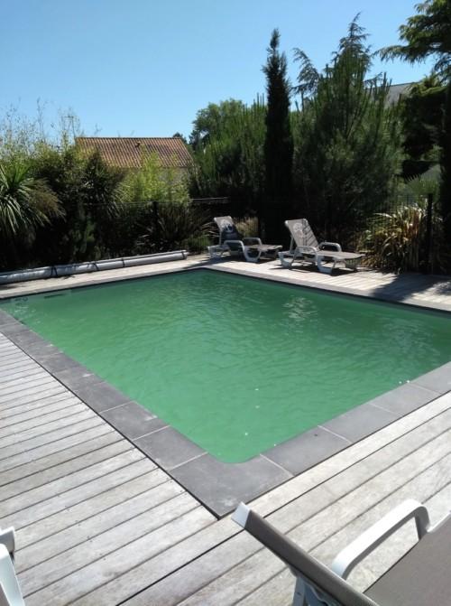 aménagement de piscine avec une haie d'arbustes persistants contre les vis à vis