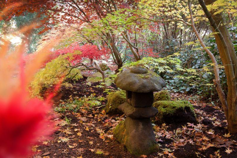 jardin japonais avec des érables du japon