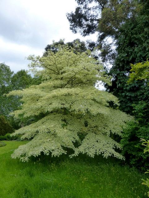 beau petit arbre