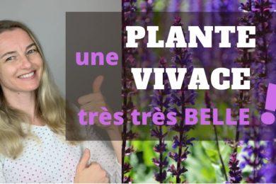 belle plante vivace