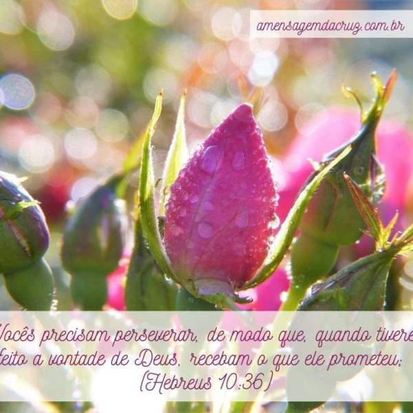 Versículo Bíblico do Dia: Paciência