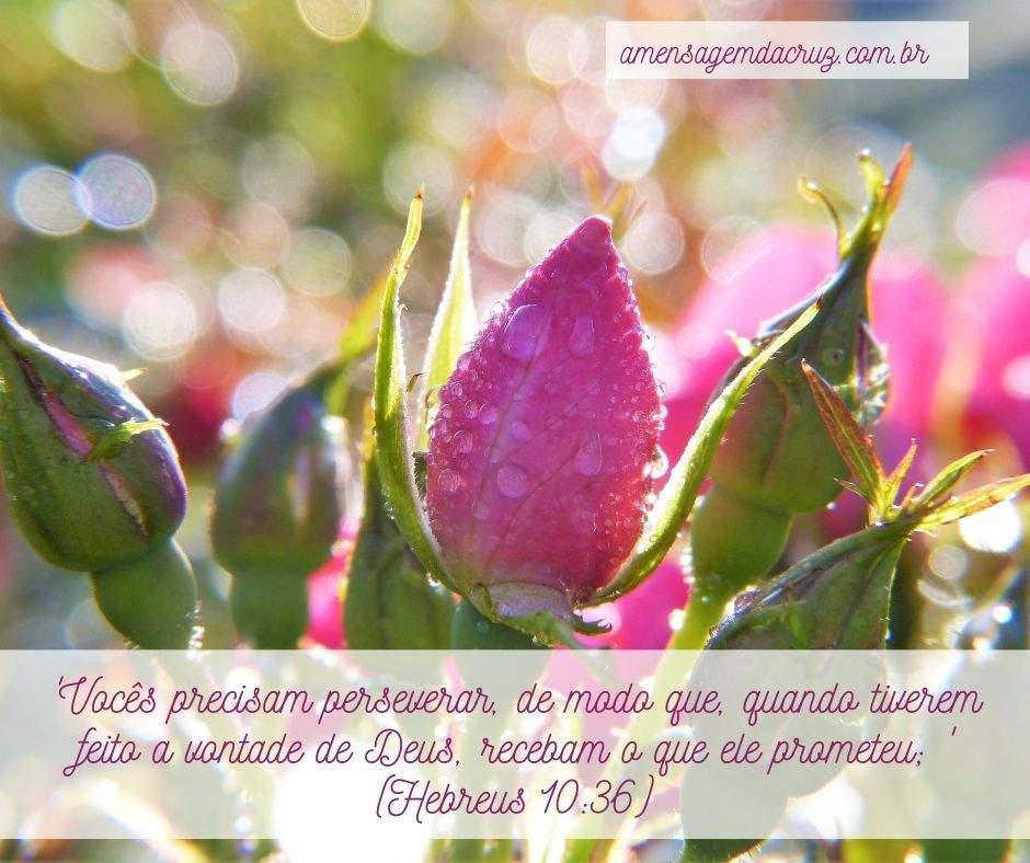 Mensagem Bíblica do Dia: Paciência.