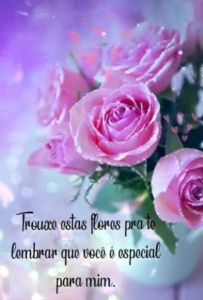 Flores Pra Você - Mensagem Bíblica de Bom Dia