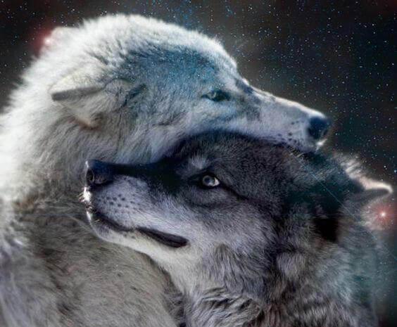 carícias-entre-lobos