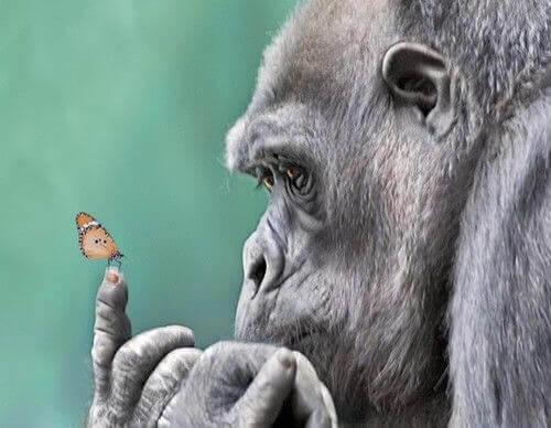 gorila-borboleta